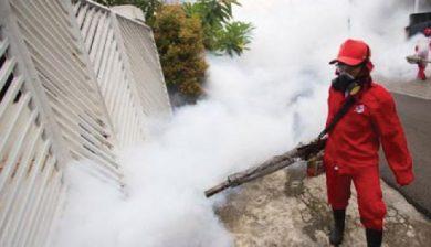 Hasil gambar untuk pest control fumida
