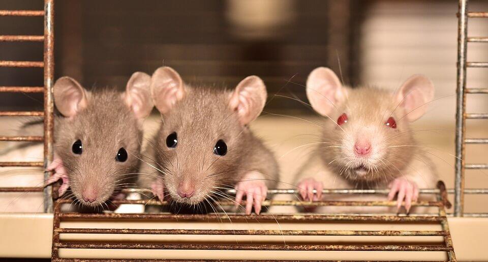 02_Tips-tips-Mencegah-Tikus-Masuk-Rumah_1.jpg